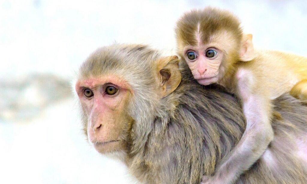 Monkeys experience the visual world like Human