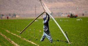 McDonald Food Comes from Bill Gates' Farmland